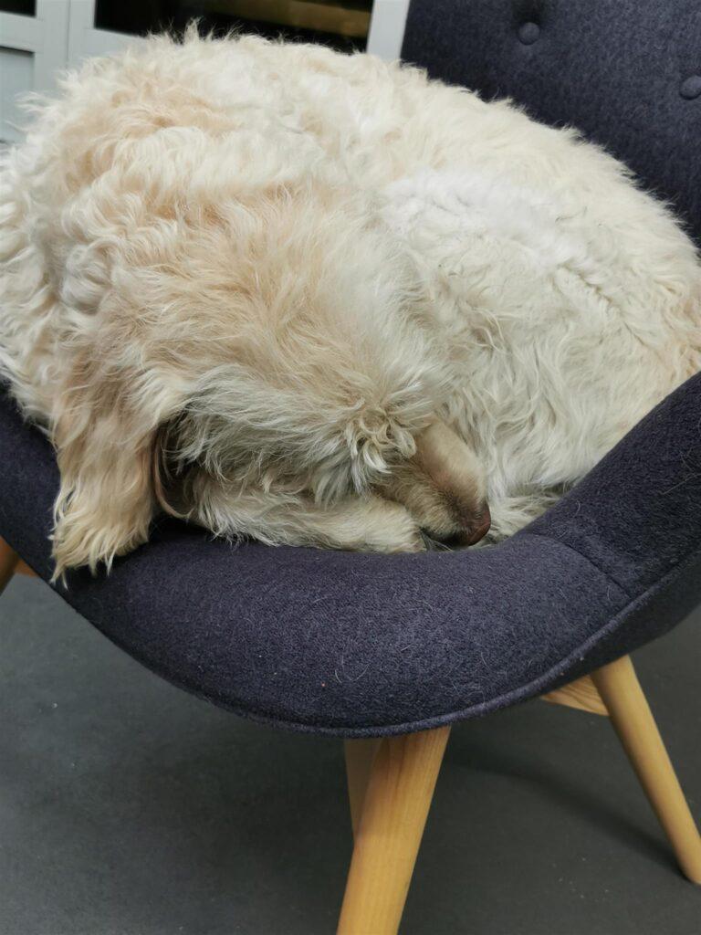 Hund sitzt auf Hocker