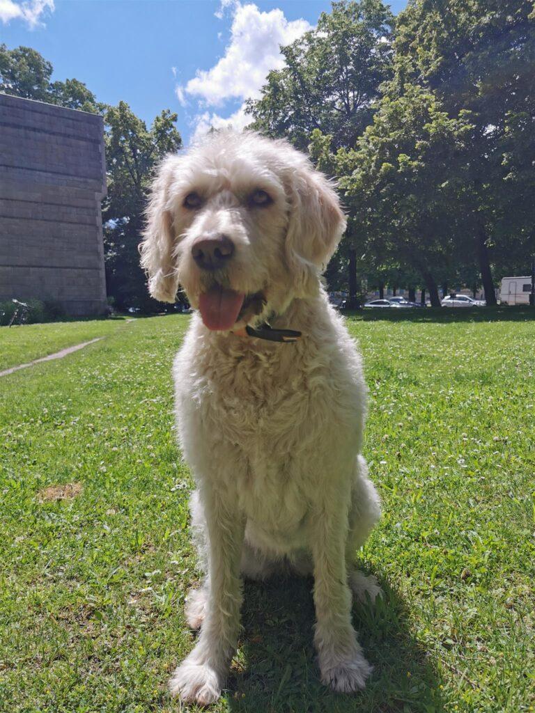 Hund im Park auf Wiese