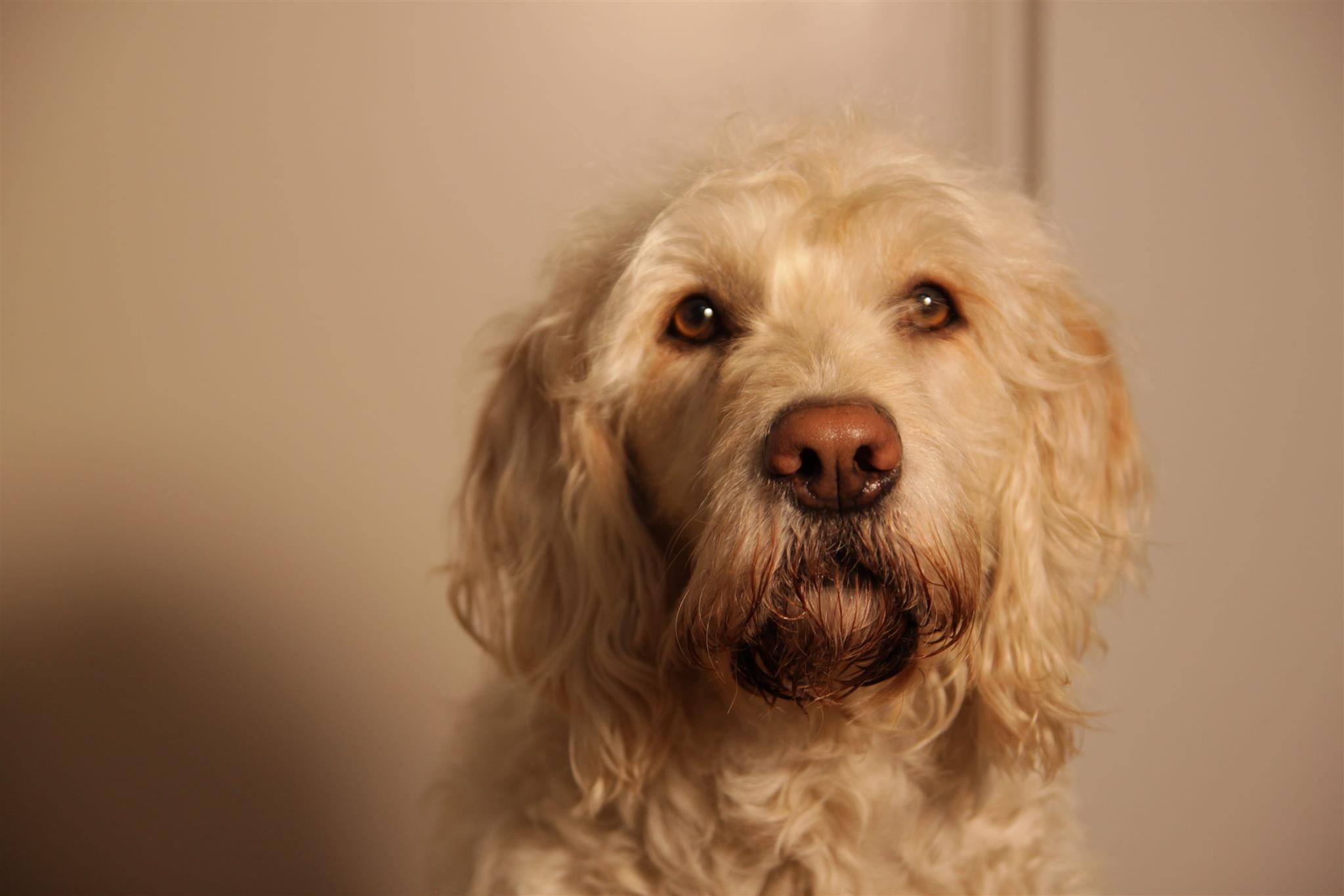 Hunde Gesicht