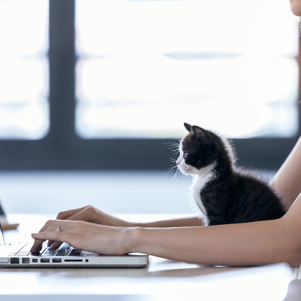 Onlinetools Frau vor Laptop mit Katze
