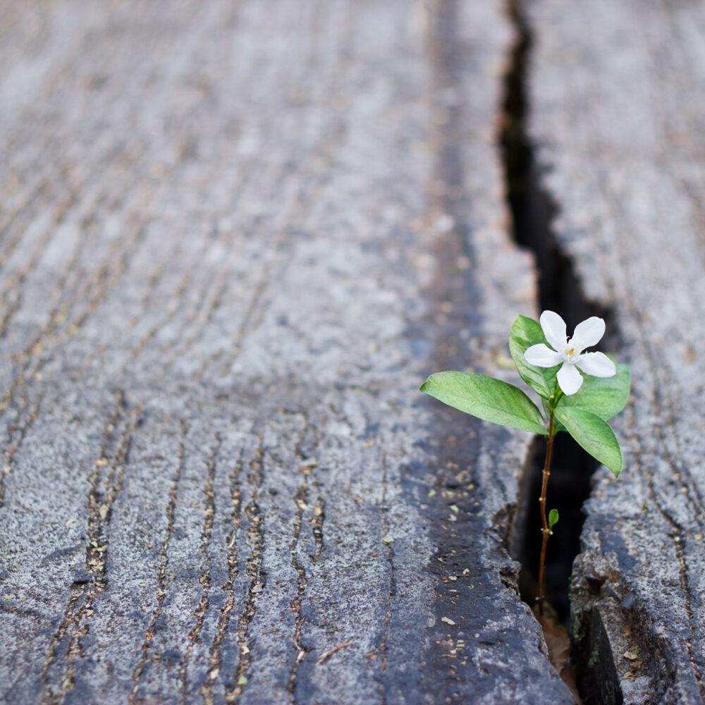 Blume, die aus einem Riss in der Straße wächst